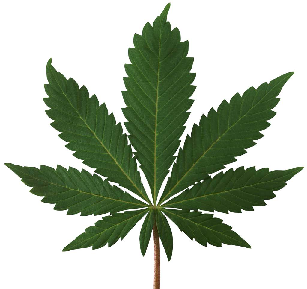 Medical marijuana patients face unavailable medication, long lines at treatment centers during COVID crisis