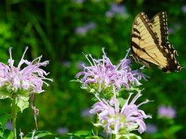 Native Plant Garden Design- Lecture