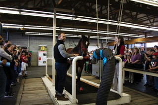 PHOTOS COURTESY OF THE EQUINE SCIENCE CENTER