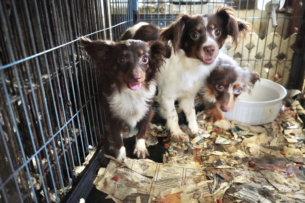 Monmouth County Spca Rescues Dogs From Horrific Conditions At Middletown Home Centraljersey Com